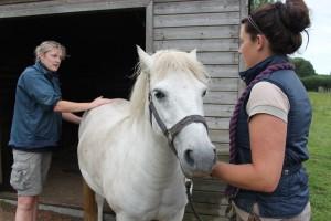 Horse MOT
