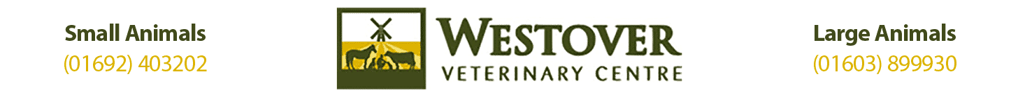 Westover Veterinary Centre – Meet our Team
