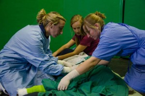 Large Animal Theatre Room, patient being prepared with sterile drapes before surgery