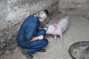 Pig check