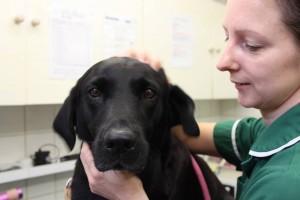 nurse clinic, dog consult