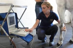 ultrasound scanning leg, diagnostic technique, lameness workup,