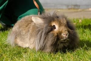 Rabbit2DSC_1766