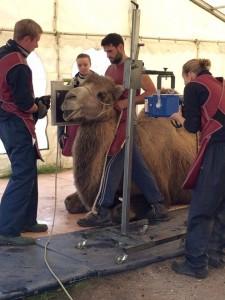 camel-image